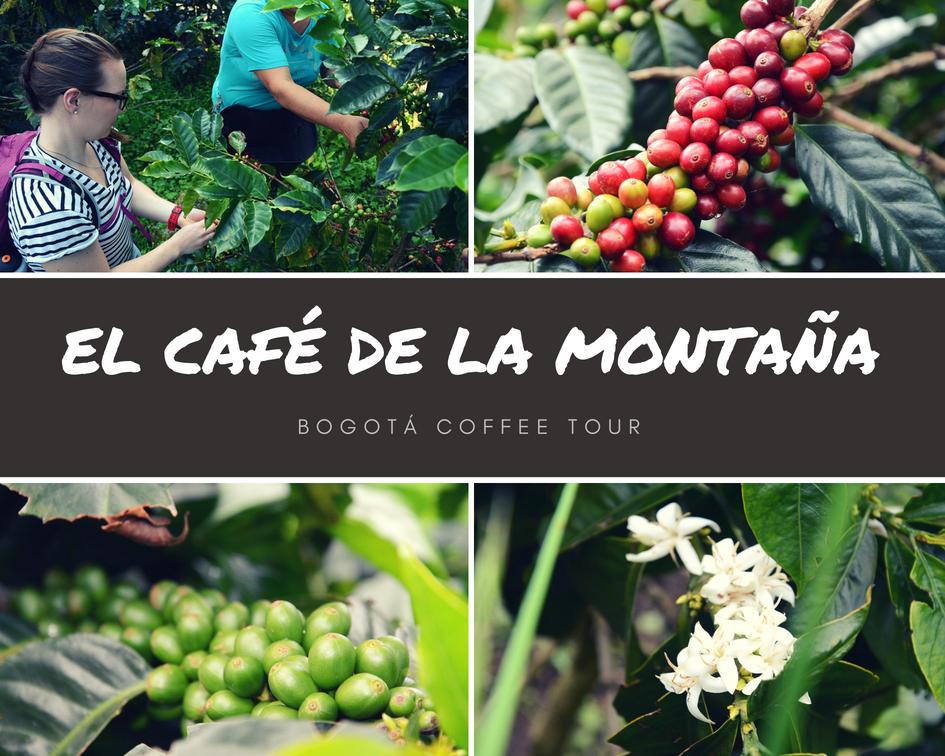 Tour de Café El café de la montaña