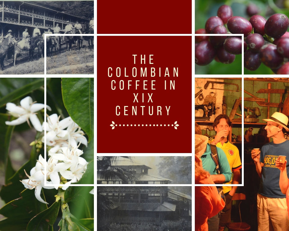 The Colombian Coffee in XIX century iii